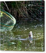 Fish Caught On A Line In Water Canvas Print
