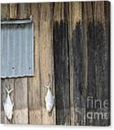 Fish Drying Outside Rustic Fisherman House Canvas Print