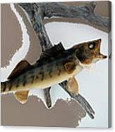 Fish Mount Set 02 C Canvas Print