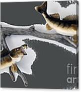 Fish Mount Set 06 B Canvas Print