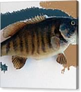 Fish Mount Set 10 Cc Canvas Print