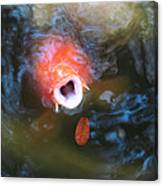 Fish Mouth Canvas Print