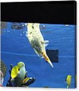 Fish - National Aquarium In Baltimore Md - 1212117 Canvas Print