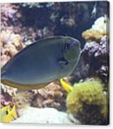 Fish - National Aquarium In Baltimore Md - 1212121 Canvas Print