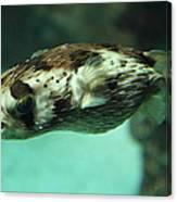 Fish - National Aquarium In Baltimore Md - 1212136 Canvas Print
