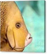 Fish Profile Canvas Print