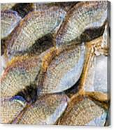 Fish Scales Background Canvas Print