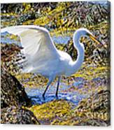 Fishing The Tide Canvas Print