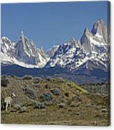 Fitz Roy Range In Springtime 2 Canvas Print