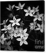 Five Petals Canvas Print