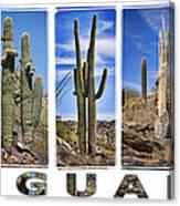 Five Saguaros Canvas Print
