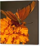 Flambeau Butterfly Canvas Print