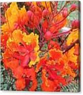 Flamboyant Desert Flowers Canvas Print