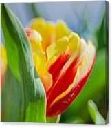 Flame Leaf Tulip Canvas Print