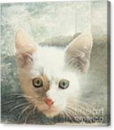 Flamepoint Siamese Kitten Canvas Print