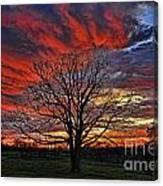 Flaming Oak Sunrise Canvas Print