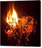 Flaming Seedheads Canvas Print