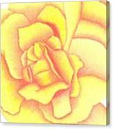 Flaming Yellow Rose Canvas Print