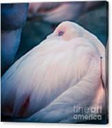 Flamingo 1b - Square Canvas Print