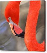 Flamingo Curves Canvas Print