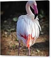 Flamingo In Fuchsia Canvas Print