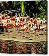 Flamingo Family Reunion Canvas Print
