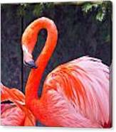 Flamingo In The Wild Canvas Print