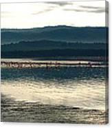 Flamingo Lake Canvas Print