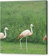 Flamingo March Canvas Print