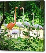 Flamingo Canvas Print