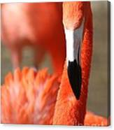 Flamingo Pose Canvas Print