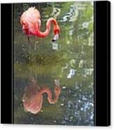 Flamingo Reflected Canvas Print