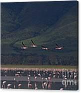 Flamingos  #6590 Canvas Print