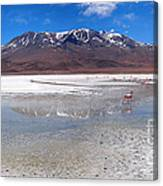 Flamingos At The Altiplano In A Salt Lake Canvas Print