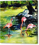 Flamingos At The St Louis Zoo Canvas Print