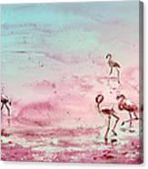 Flamingos In Camargue 03 Canvas Print