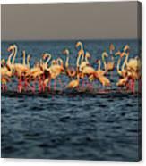 Flamingos On Lake Turkana Outside Elyse Canvas Print