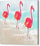 Flamingos On The Beach Canvas Print