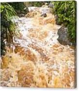 Flash Flood In West Coast Creek Of Nz South Island Canvas Print