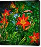 Flashes Of Garden Fire Canvas Print