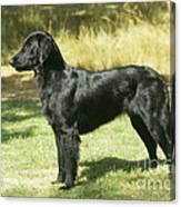 Flat-coated Retriever Dog Canvas Print