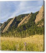 Flatirons With A Purple Wildflower  Canvas Print