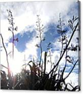 Flax Light Canvas Print