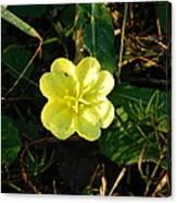 Fleur Jaune Couverte De Rosee Canvas Print