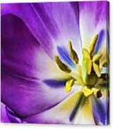 Fleur Viii Canvas Print