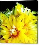 Fleurs De Cactus 2 Canvas Print