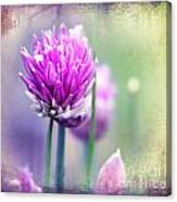 Fleurs De Oboulette Canvas Print