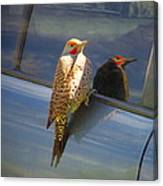Yellow Shafted Northern Flicker Hanging Around Canvas Print