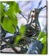 Flicker In The Lilacs Canvas Print
