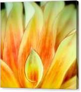 Flickering Petals Canvas Print